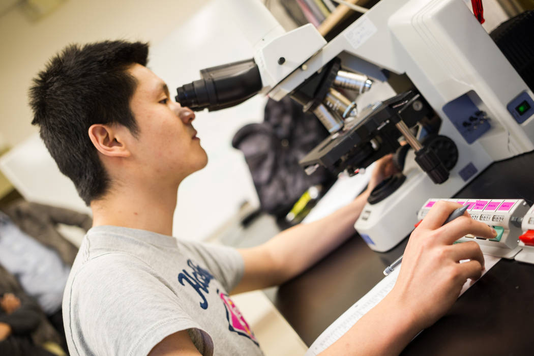 UNLV graduate student Hongbin Jin looks through slides to identify and note down various kinds ...