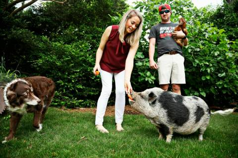 In this April 25, 2019 photo, a pig named Hamilton resides in Raleigh, N.C., with Kyle Eckenrod ...