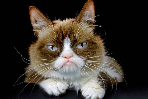 Grumpy Cat posing for a photo Dec. 1, 2015, in Los Angeles. Grumpy Cat, whose sour puss became ...