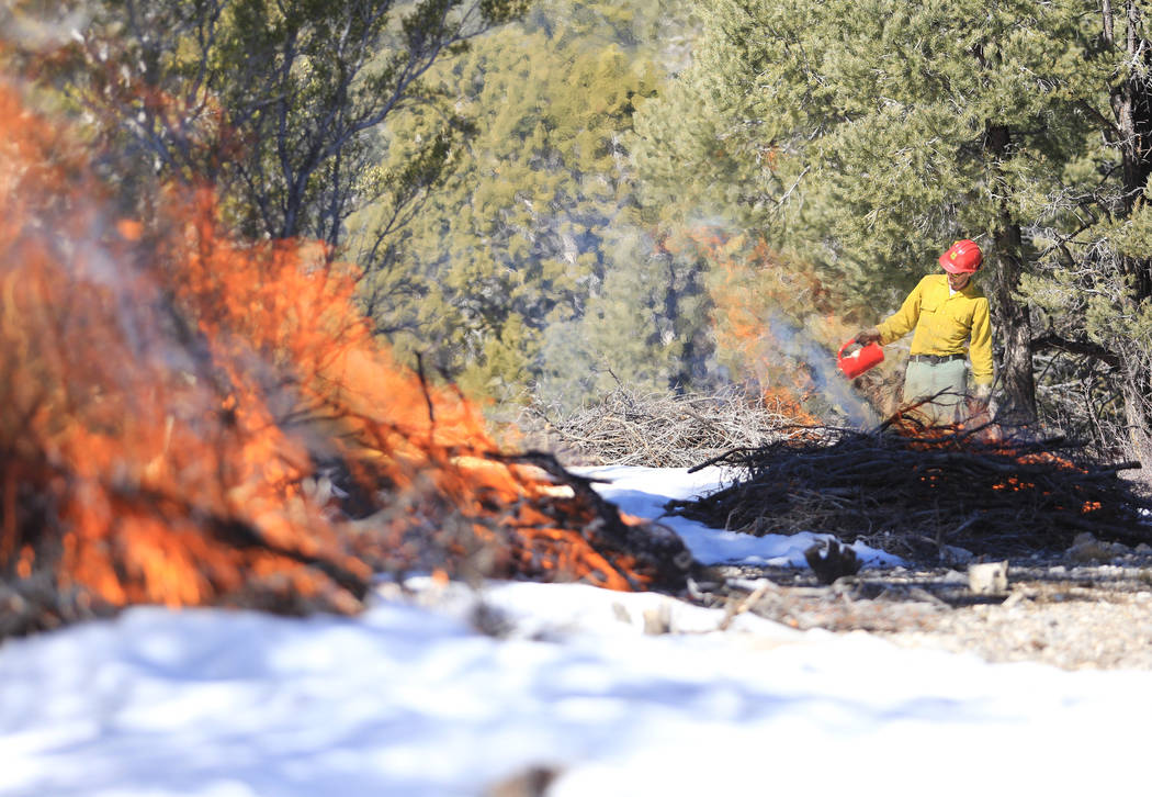 U.S. Forest Service Senior Firefighter Joel Presmyk, 26, starts a prescribed burn with a drip t ...