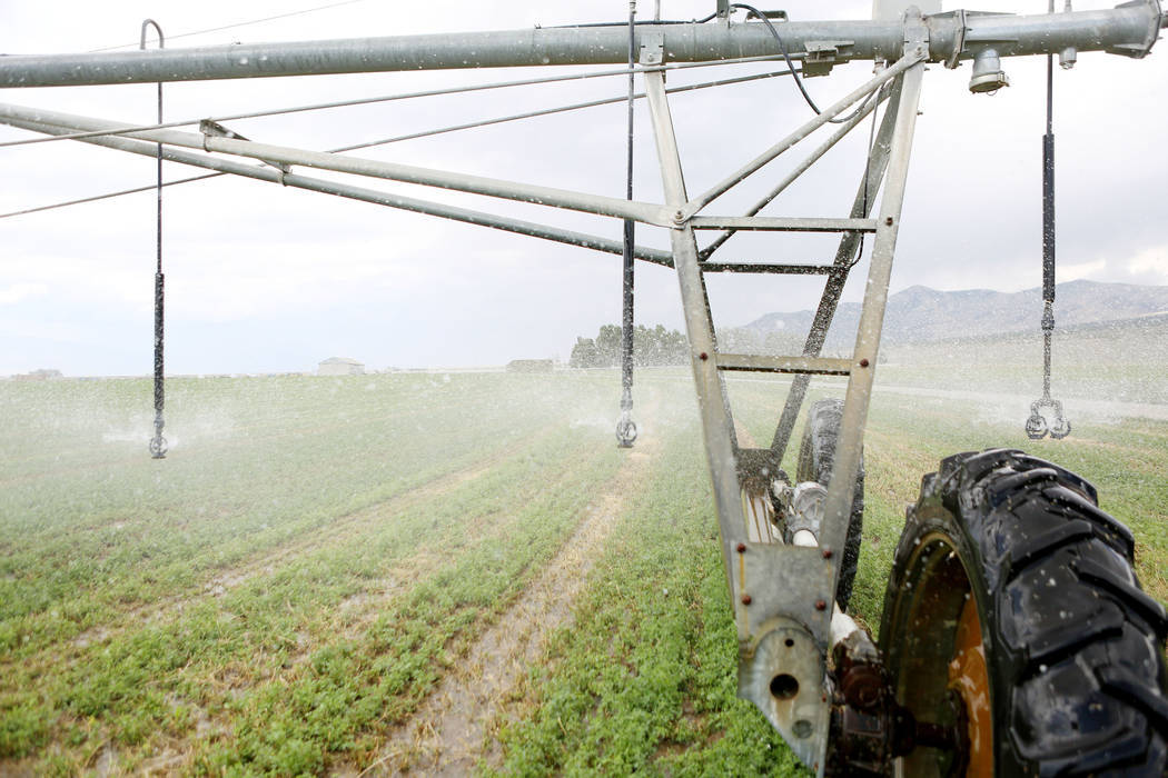 Water sprays on a hay field on Aug. 7 at a ranch in White Pine County's Spring Valley. (Las Veg ...