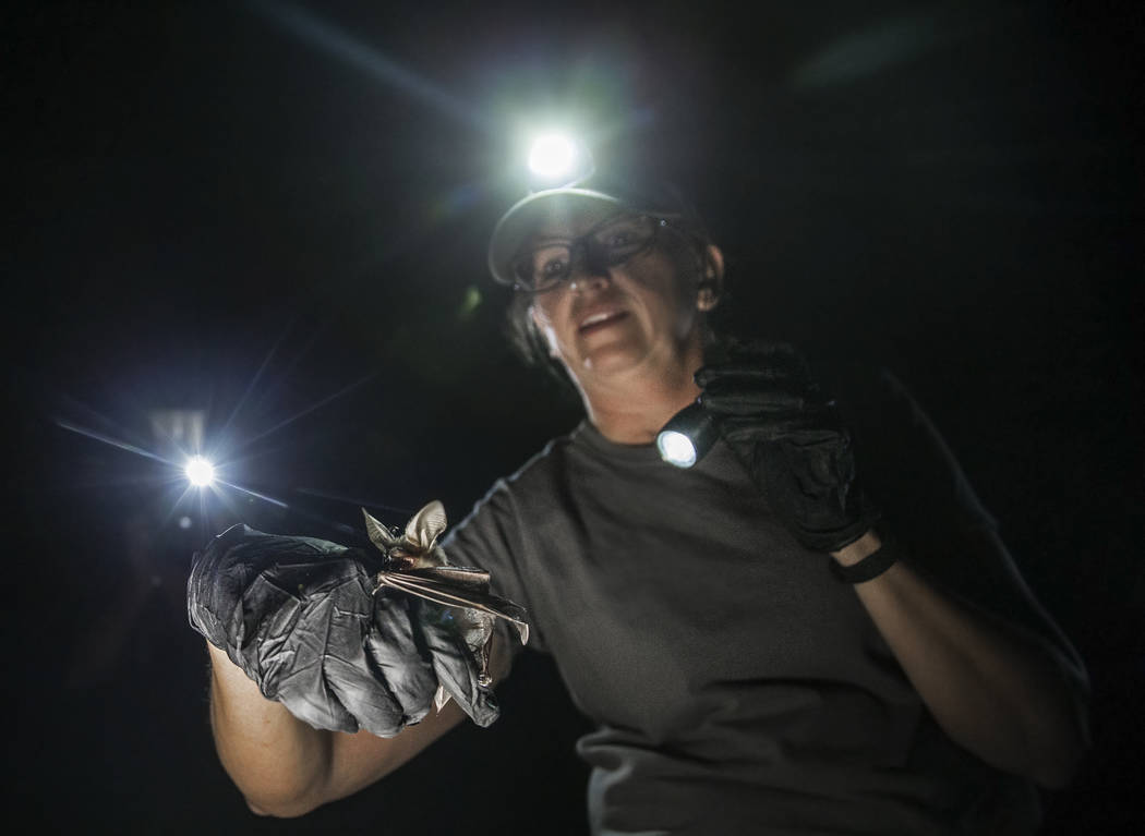 Christy Klinger, a wildlife biologist with the Nevada Department of Wildlife, documents a bat d ...