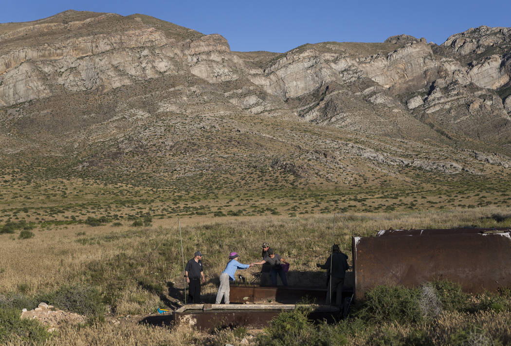 """Participants in a """"bat blitz"""" event set up nets in the East Mormon mountain range on ..."""
