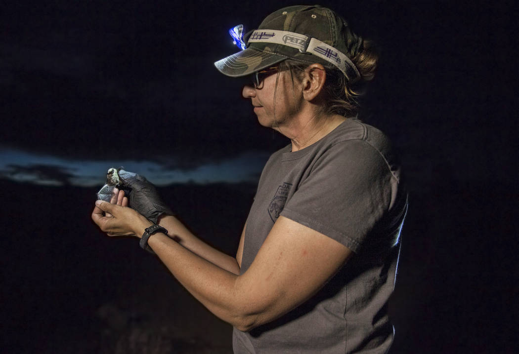 Christy Klinger, a wildlife biologist with the Nevada Department of Wildlife, examines a female ...
