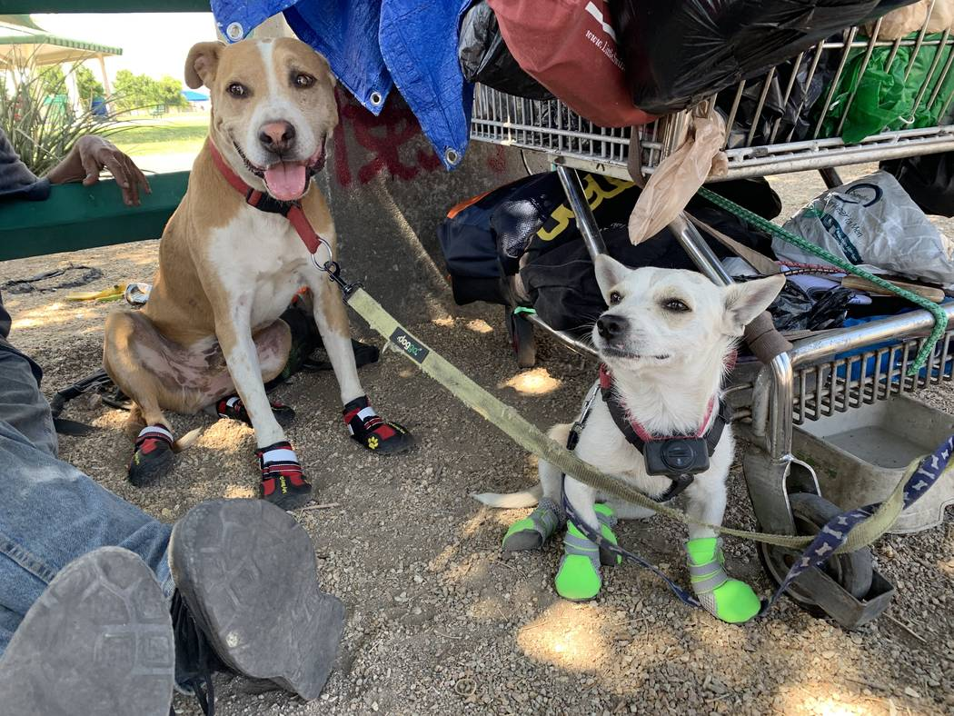 Dogs Junior and King wear booties given to them by Urban Underdogs. Urban Underdogs is a nonpro ...