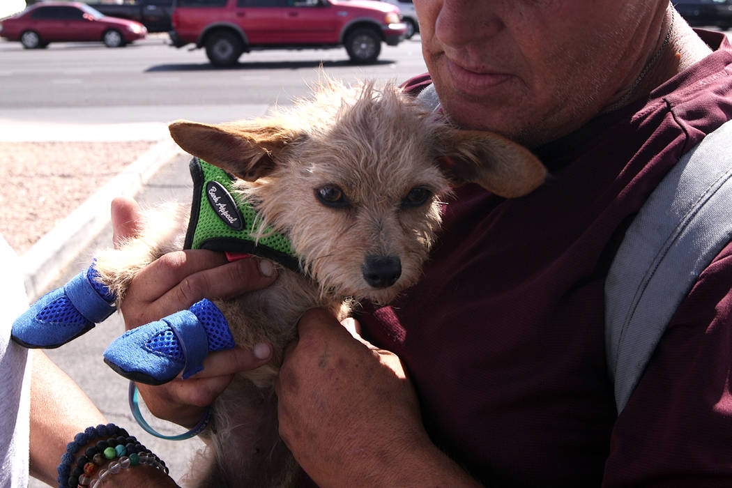 Urban Underdogs provides things like food, water and booties to dogs of the Las Vegas homeless. ...