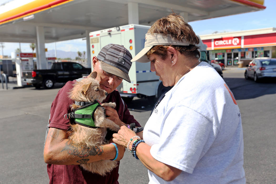 Cynthia Miyamoto, found of Urban Underdogs, puts dog booties on Karma as she is held by her own ...