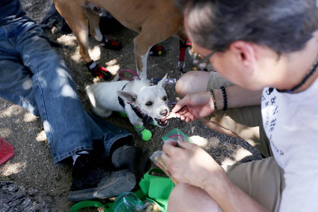 Volunteer John Parris feeds a treat to Caster at Molasky Family Park in Las Vegas, Monday, June ...
