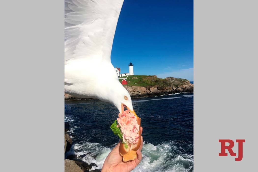 In this Friday, June 7, 2019, photo provided by Alicia Jessop, a seagull takes a bit of Jessop' ...