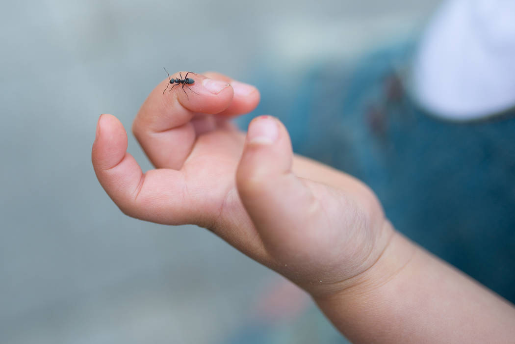 Getty Images If scout ants have left a scent trail in your home, it won't be long before more a ...