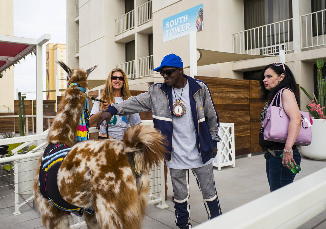 Entertainer Flavor Flav greets a llama before joining in on a team photo shoot for the Lights F ...