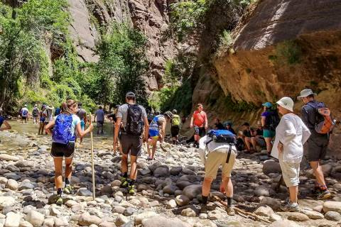 Zion National Park visitors congregate near the Virgin River to hike The Narrows at Zion Nation ...