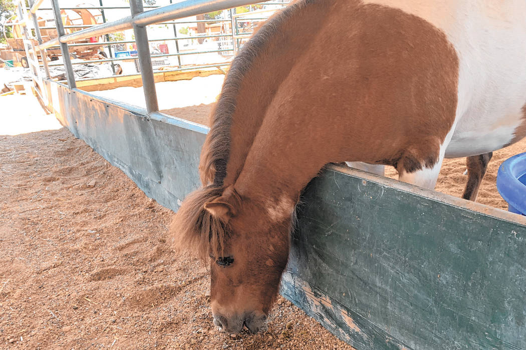 One of the horses at the Horses4Heroes Family Equestrian Center eats June 17 during the organiz ...