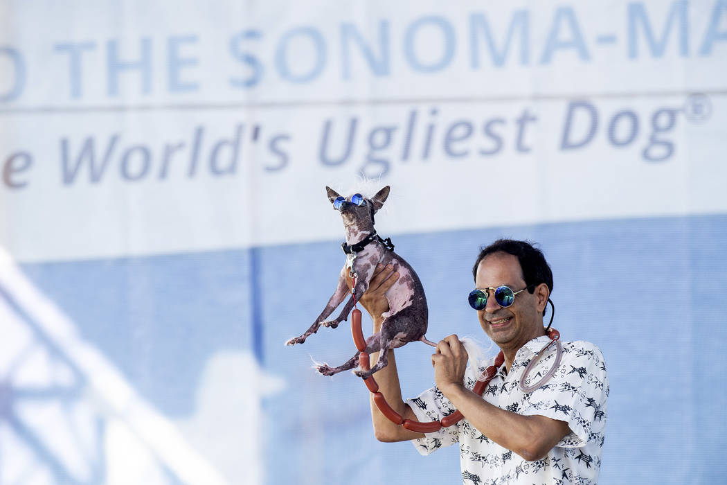 Dane Andrew holds Rascal aloft while competing in the World's Ugliest Dog Contest at the Sonoma ...