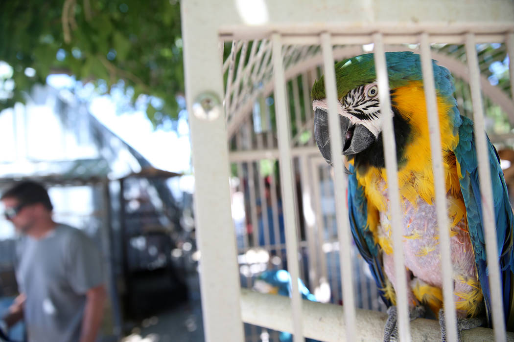 A blue and gold macaw at Gilcrease Nature Sanctuary during the Founder's Day Kids Carnival at G ...