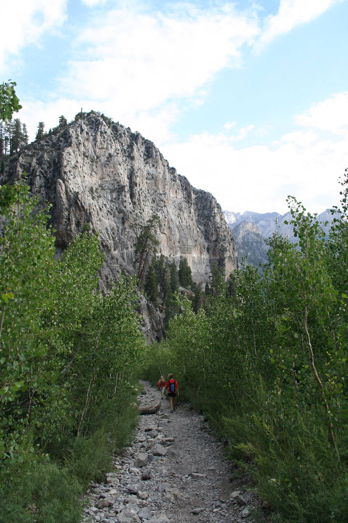 The Mount Charleston area of the Spring Mountains National Recreation Area is an ideal summer d ...
