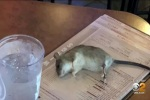 Live rat falls from ceiling, lands on table at Buffalo Wild Wings