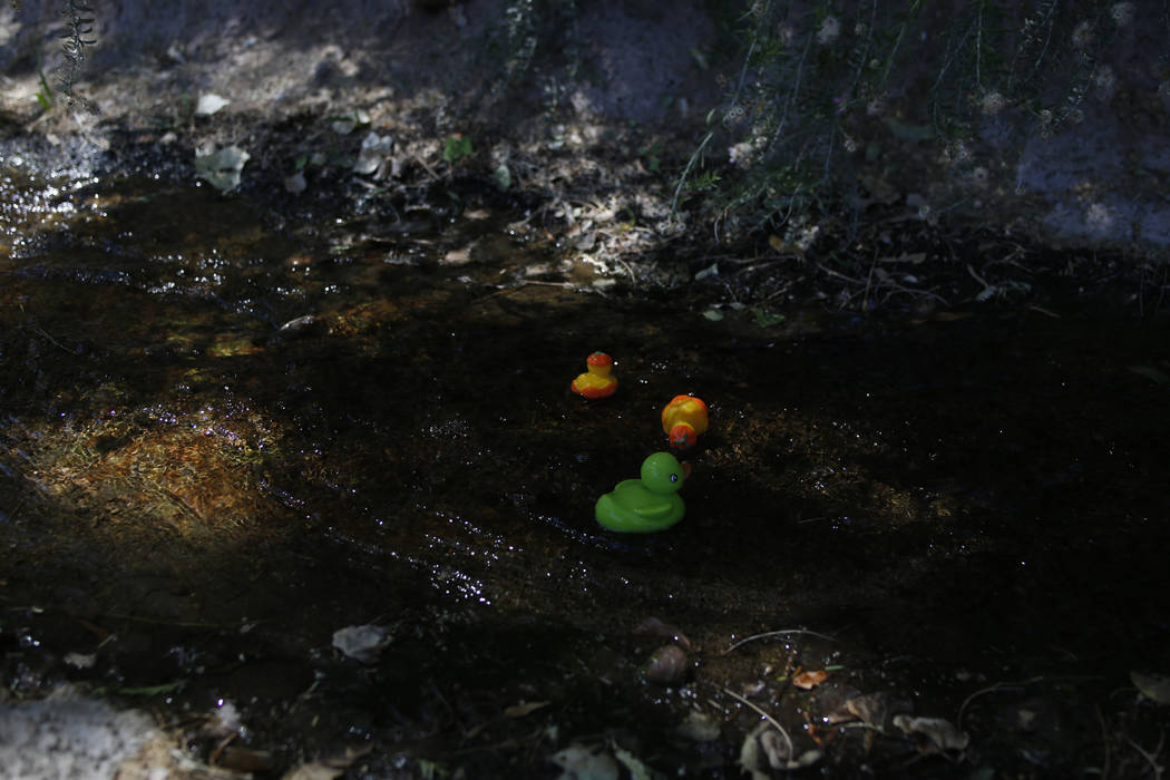 Plastic ducks used in a duck race float down a river during Pioneer Day at Old Mormon Fort in L ...