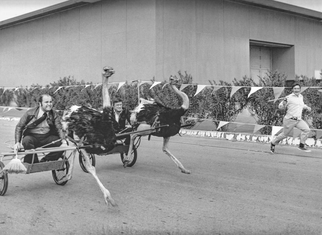 Ostrich racing at the Las Vegas Hilton. (Westgate)