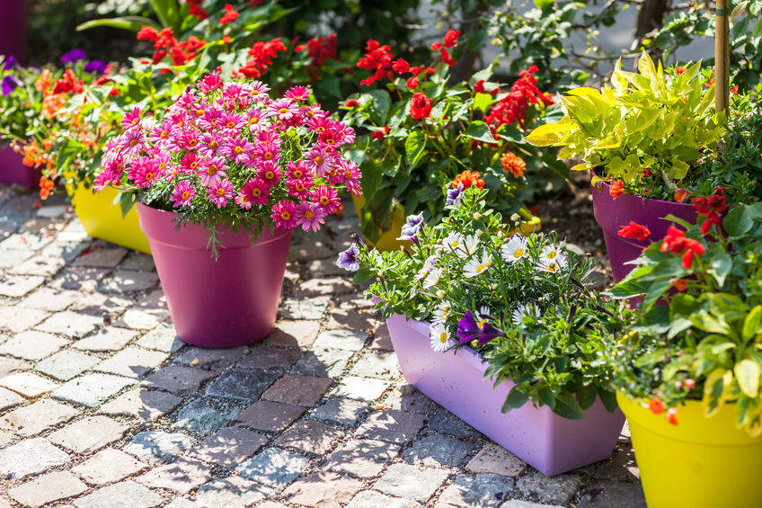 Colorful outdoor flower pots add interest to a small garden, patio or terrace. (GMJ Interiors)