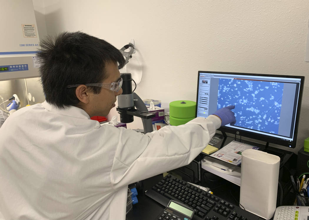 In this photo taken March 1, 2019, lab technician Ismael Montanez points to fish cells on scree ...