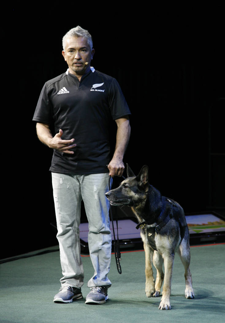 """Cesar Millan brings his """"Leader of the Pack"""" live show to the Palms Friday. (Courtesy photo)"""