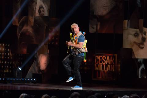 """Cesar Millan — My Story: Unleashed,"" a one-man show starring the famed dog behaviorist, ..."
