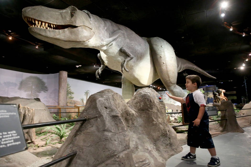 """Dylan Steele, 5, of Cibolo, Texas, takes part in """"Carnivore Crime Scene: Cretaceous Period"""" at ..."""