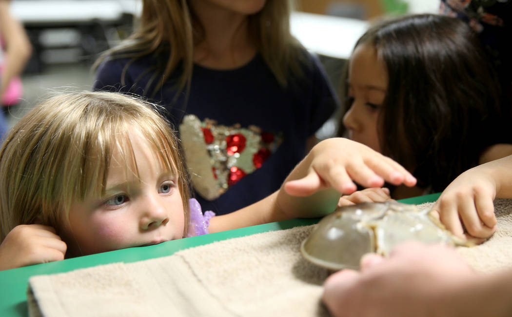 """Lake Dahlem, 3, of Henderson, checks out a horseshoe crab during """"Critter Connection"""" ..."""