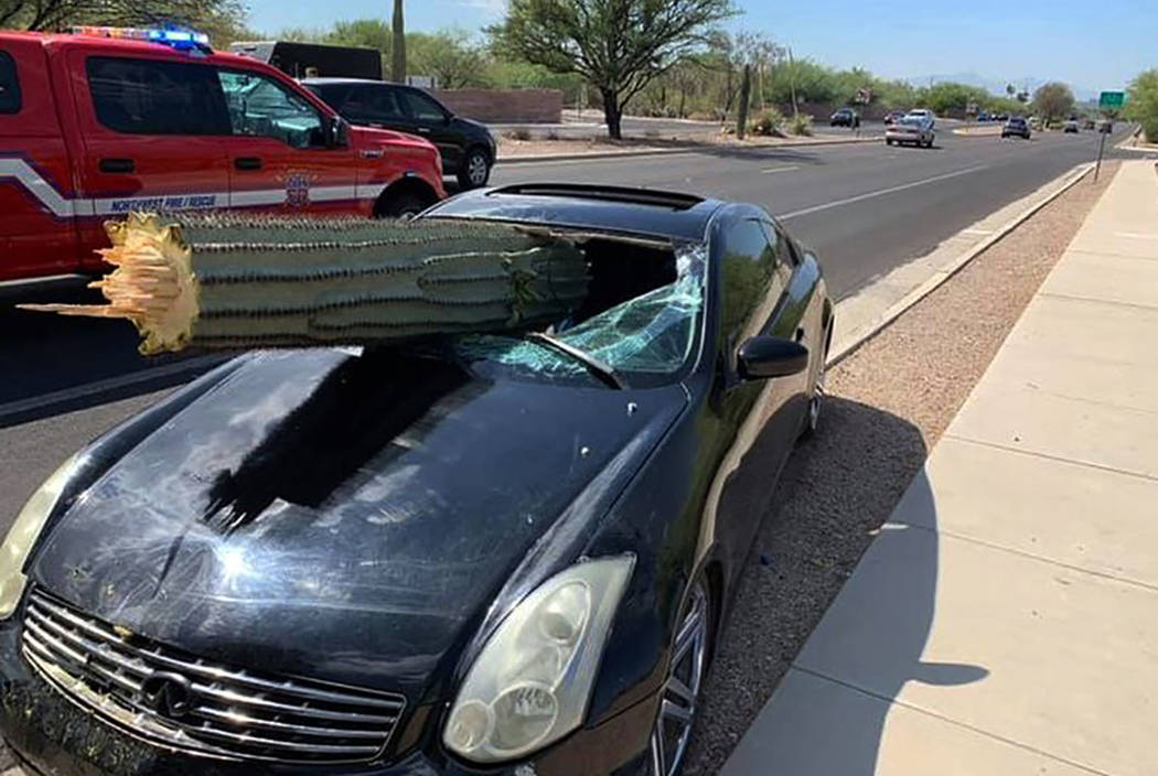 A driver escaped injury when his car's windshield was pierced by the trunk of a saguaro cactus ...