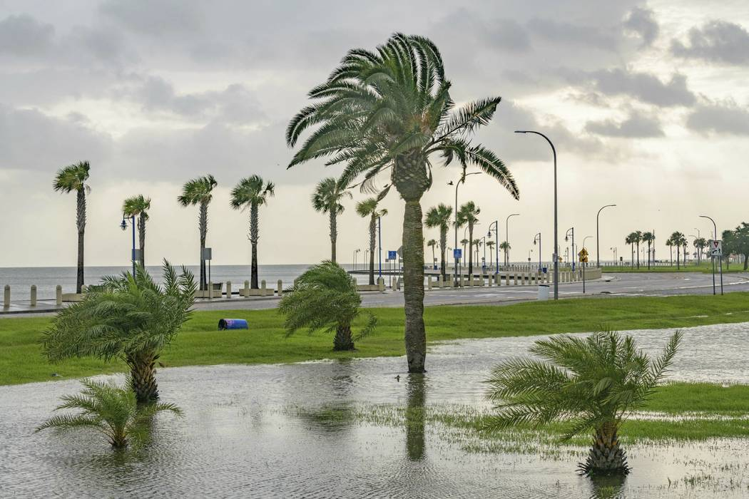 Wind blows through the trees as there is very little flooding from Lake Pontchartrain on Lakesh ...