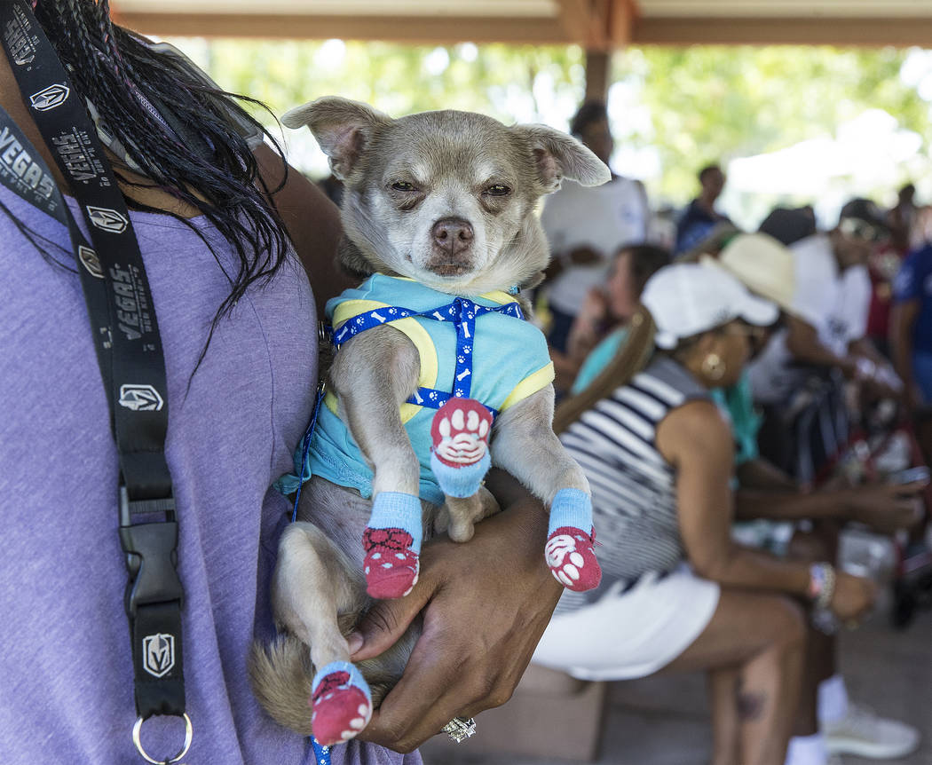 Tiffany Phyfiher holds her chihuahua Brawny during the 5th Annual Community BBQ on Saturday, Ju ...