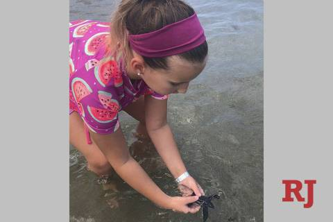 Samantha Kohl, 10, puts her hands around a baby leatherback turtle in Boca Raton, Fla., on July ...