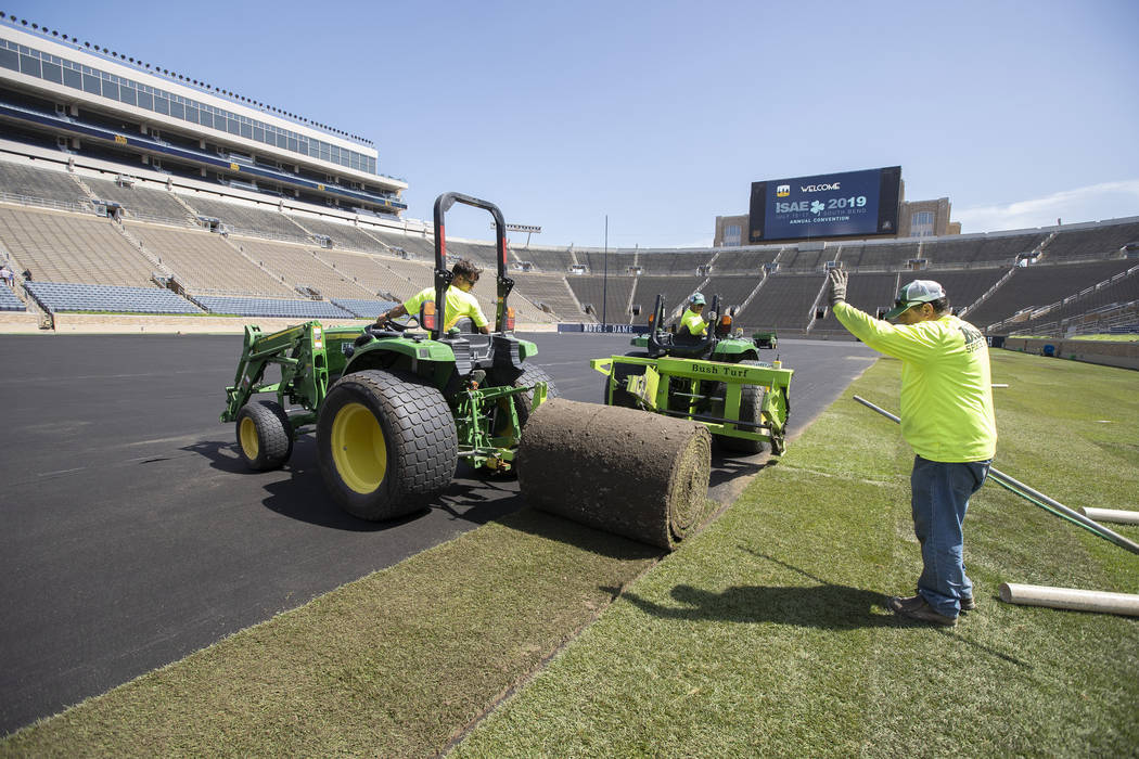 Natural turf is installed at Notre Dame Stadium in preparation for a professional soccer match ...