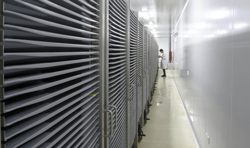 This July 13, 2019 photo provided by Guangzhou Wolbaki Biotech shows containers where Aedes alb ...