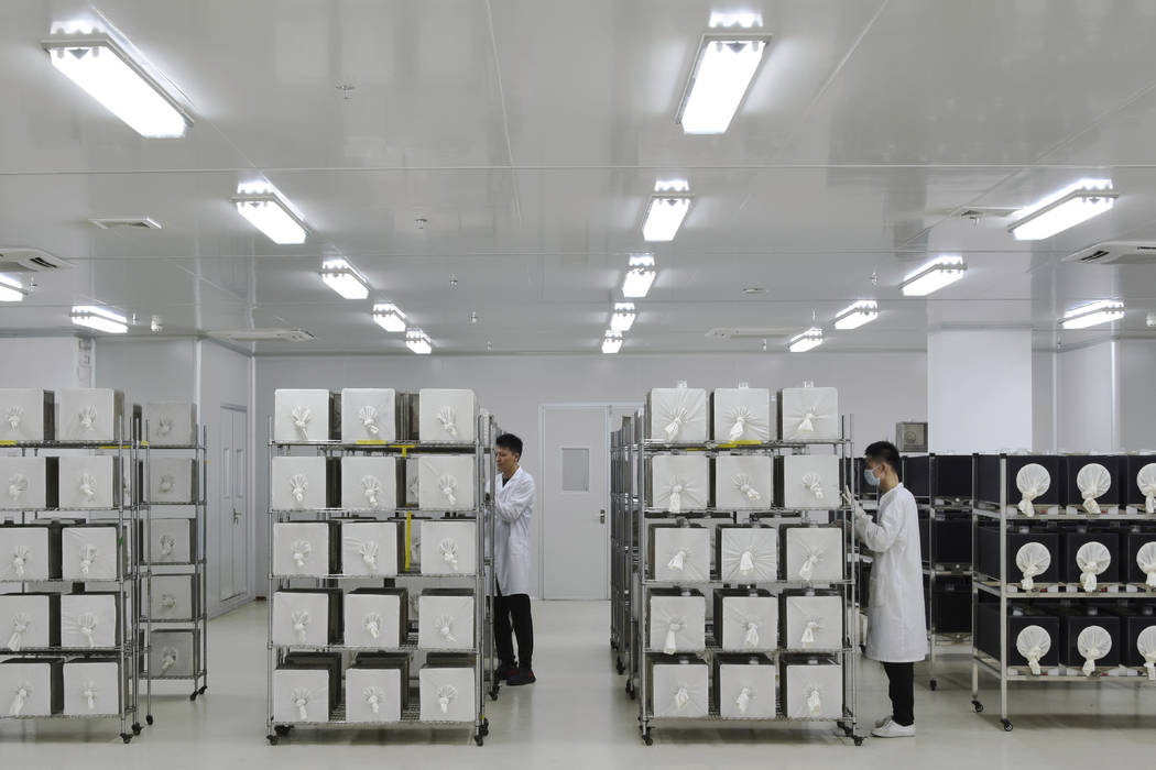 This July 13, 2019 photo provided by Guangzhou Wolbaki Biotech shows containers where adult Aed ...