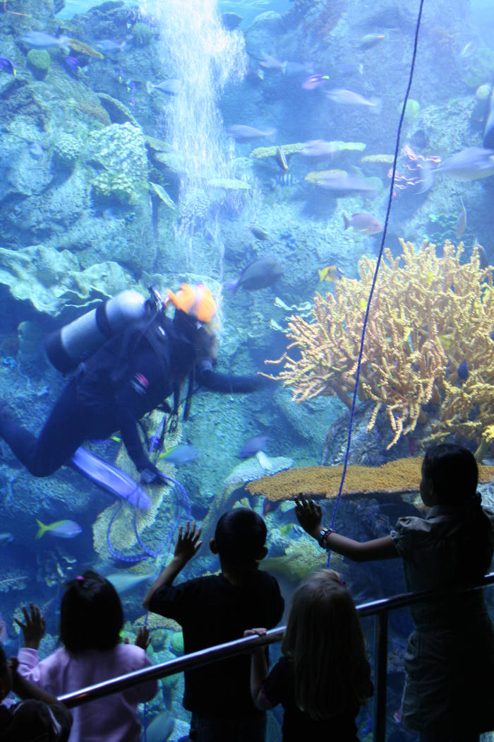 Children at the Aquarium of the Pacific are often treated to the sight of underwater divers who ...
