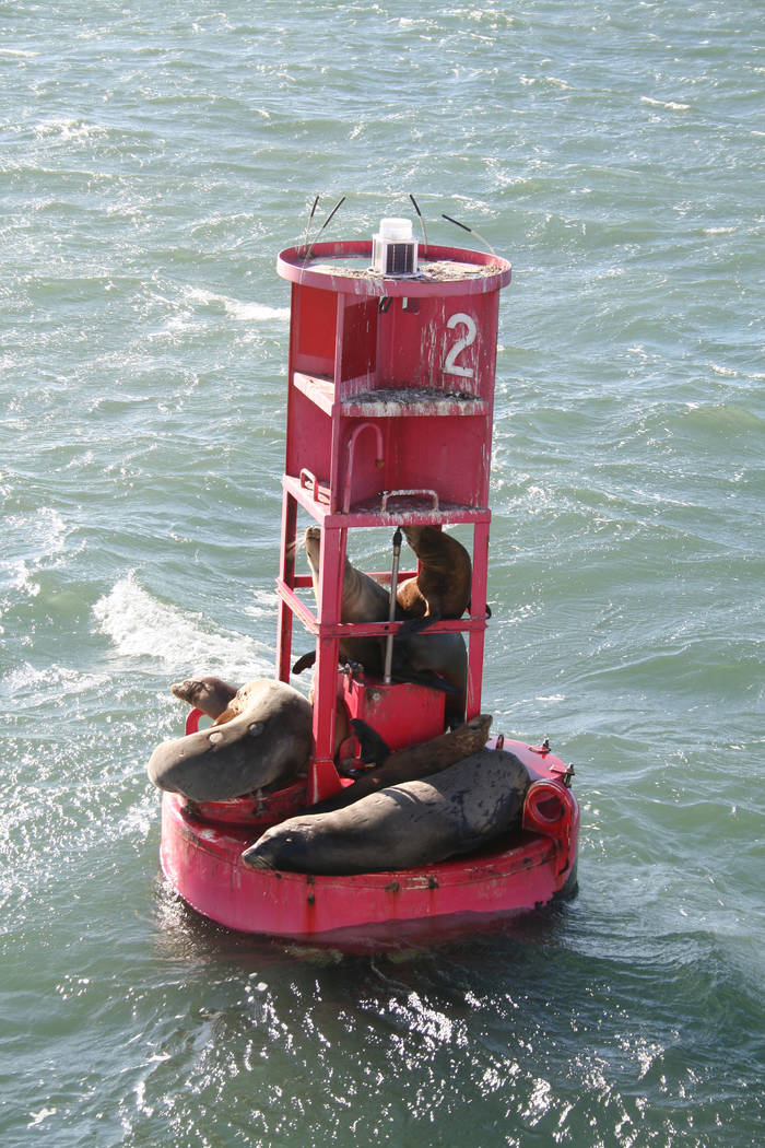 A short harbor cruise that boards next to the Aquarium of the Pacific gets visitors out on the ...