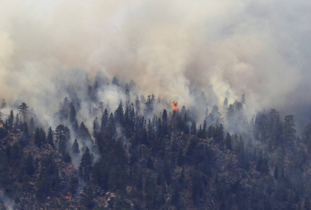 A tree erupts in flame in the face of the Museum Fire Sunday, July 21, 2019 in Flagstaff, Ariz. ...
