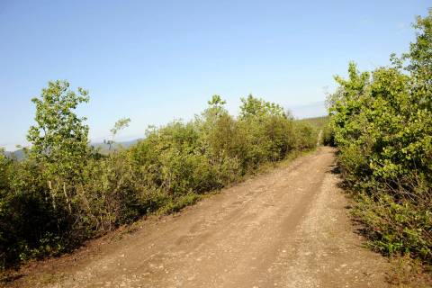 The Stampede Road becomes a narrow, rutted four-wheel drive trail after eight miles from its in ...