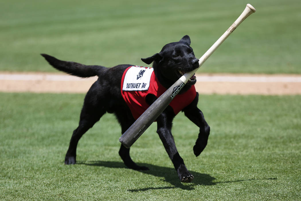 Las Vegas 51s bat dog Finn carries a bat during a game against the Albuquerque Isotopes at Cash ...