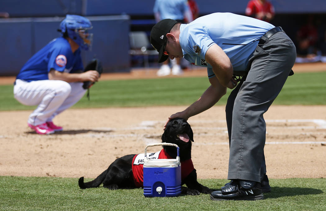 Umpire Bryan Fields pets Las Vegas 51s bat dog Finn after the 5-year-old labrador retriever bro ...