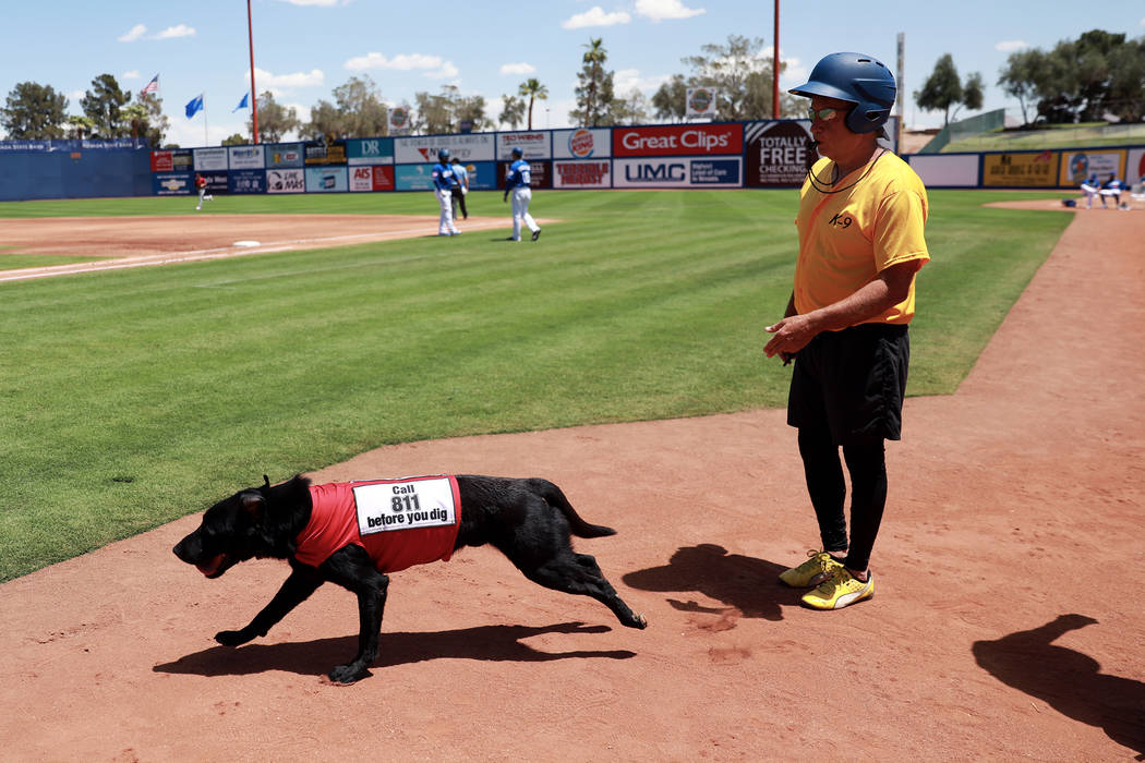 Fred Hassen, founder of Sit Means Sit dog training, sends Las Vegas 51s bat dog Finn to fetch a ...