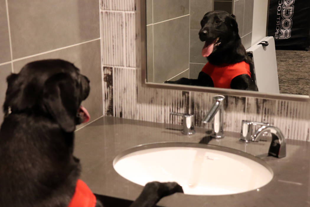 Las Vegas Aviators bat dog, Finn, admires himself in the mirror prior to heading to the field f ...