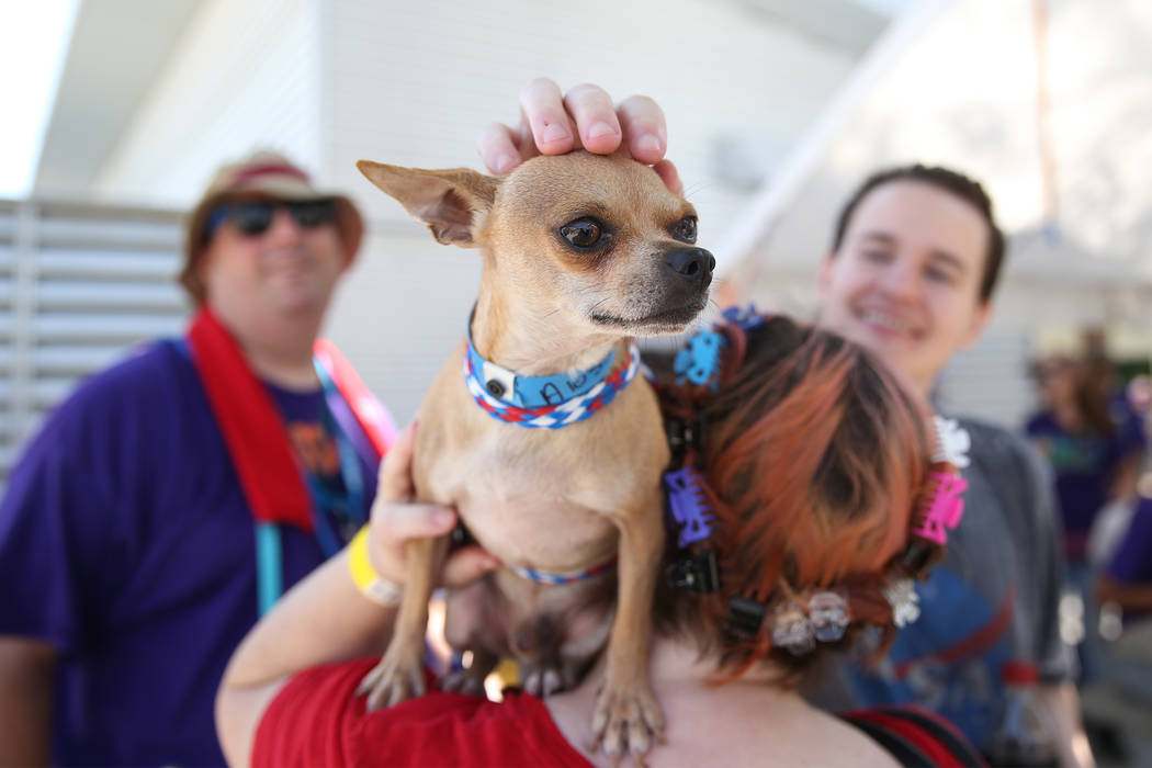 Karen Hughes of Las Vegas holds a dog she was interested in adopting during the national Clear ...