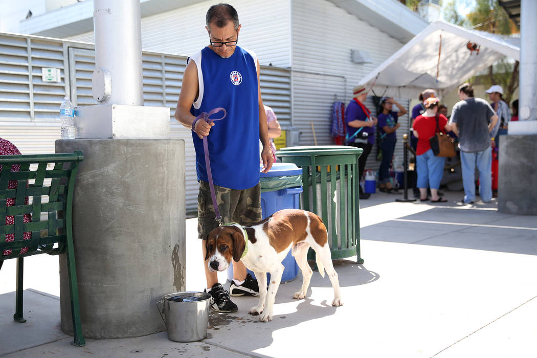 Jesus Chavez of Las Vegas walks a dog in his search of finding a pet for his family during the ...