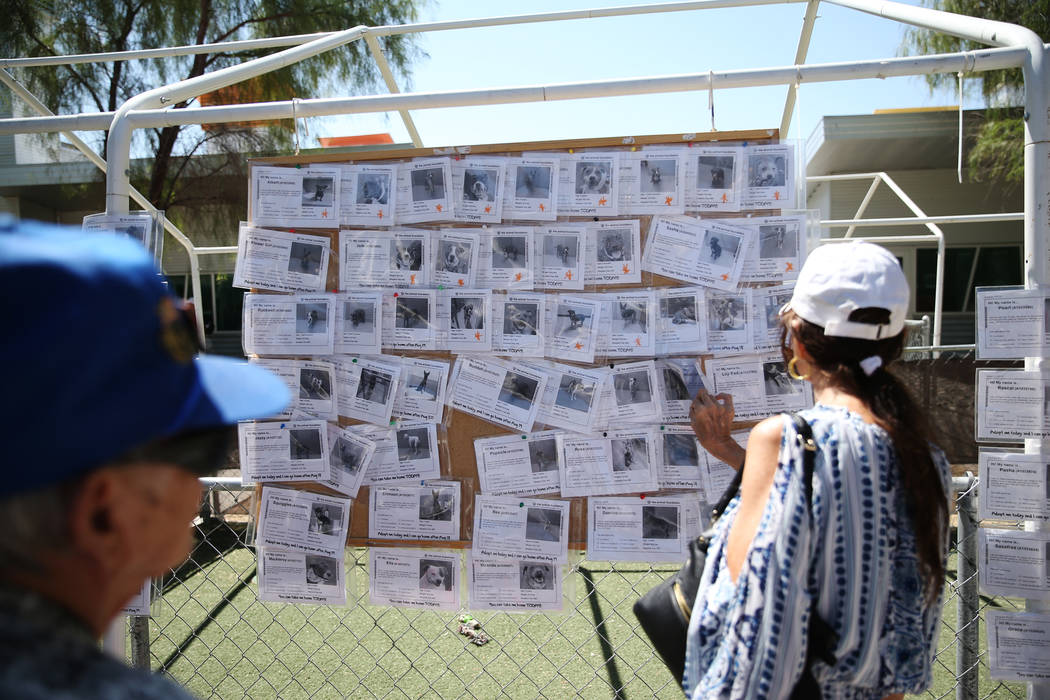 People look at the available dog board during the national Clear the Shelters event at the Anim ...