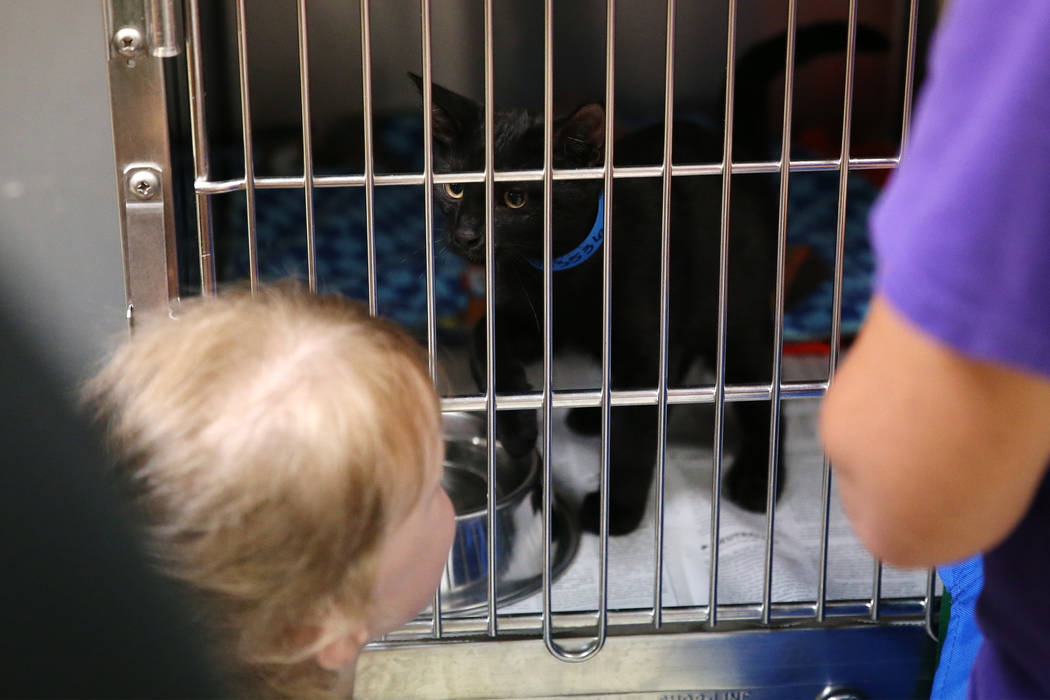Kirstin Gies, 5, of Las Vegas, looks at the cat her parents adopted during the national Clear t ...