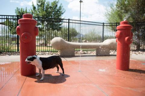 A dog named Tina cools off at the dog friendly splash pad at the Bark Park at Heritage Park in ...