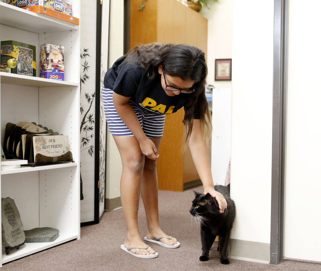 Anaisa Maestas, 13, pets an adoptable cat at the Rescued Treasures Cat Cafe, Tuesday, Aug. 6, 2 ...